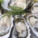 Oysters Fresh