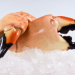 fresh florida stone crab claws